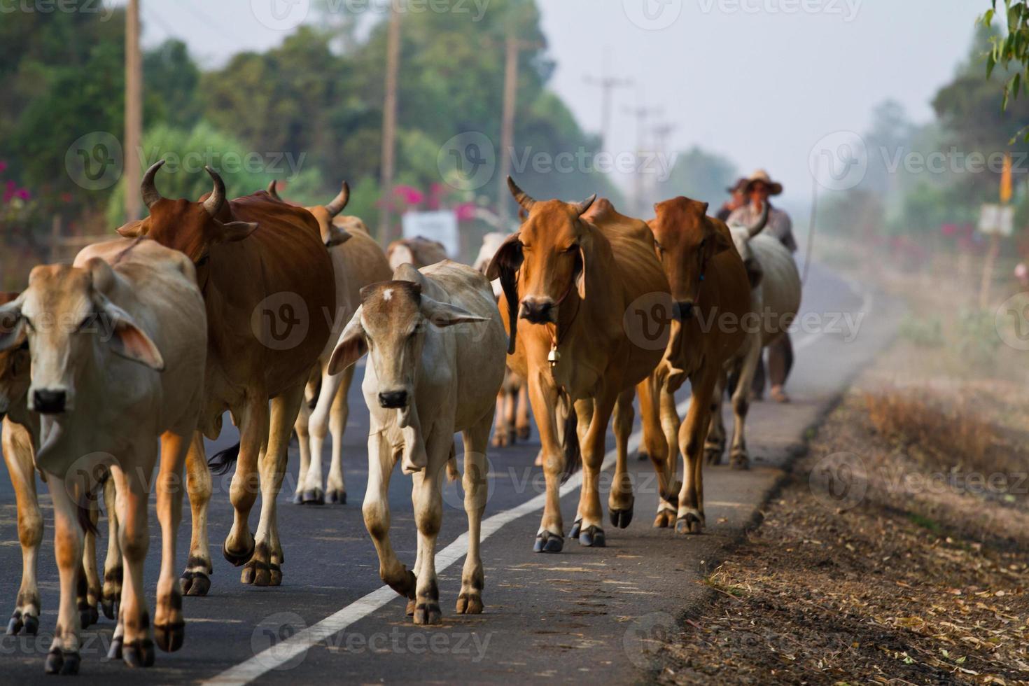 manier van leven platteland in thailand foto