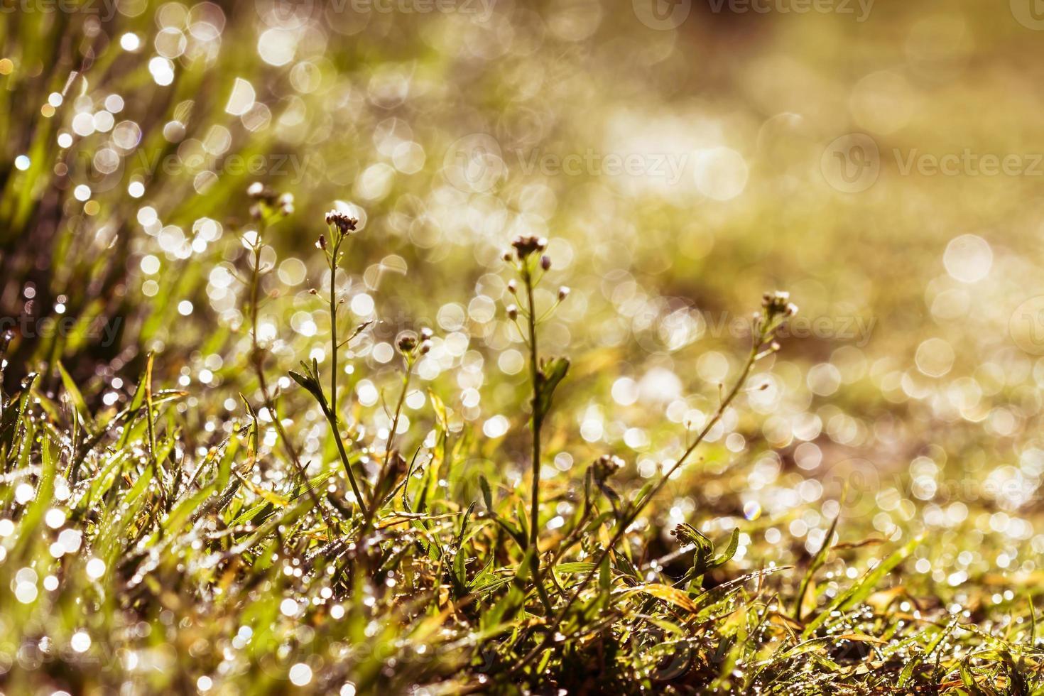 druppels dauw op gras foto