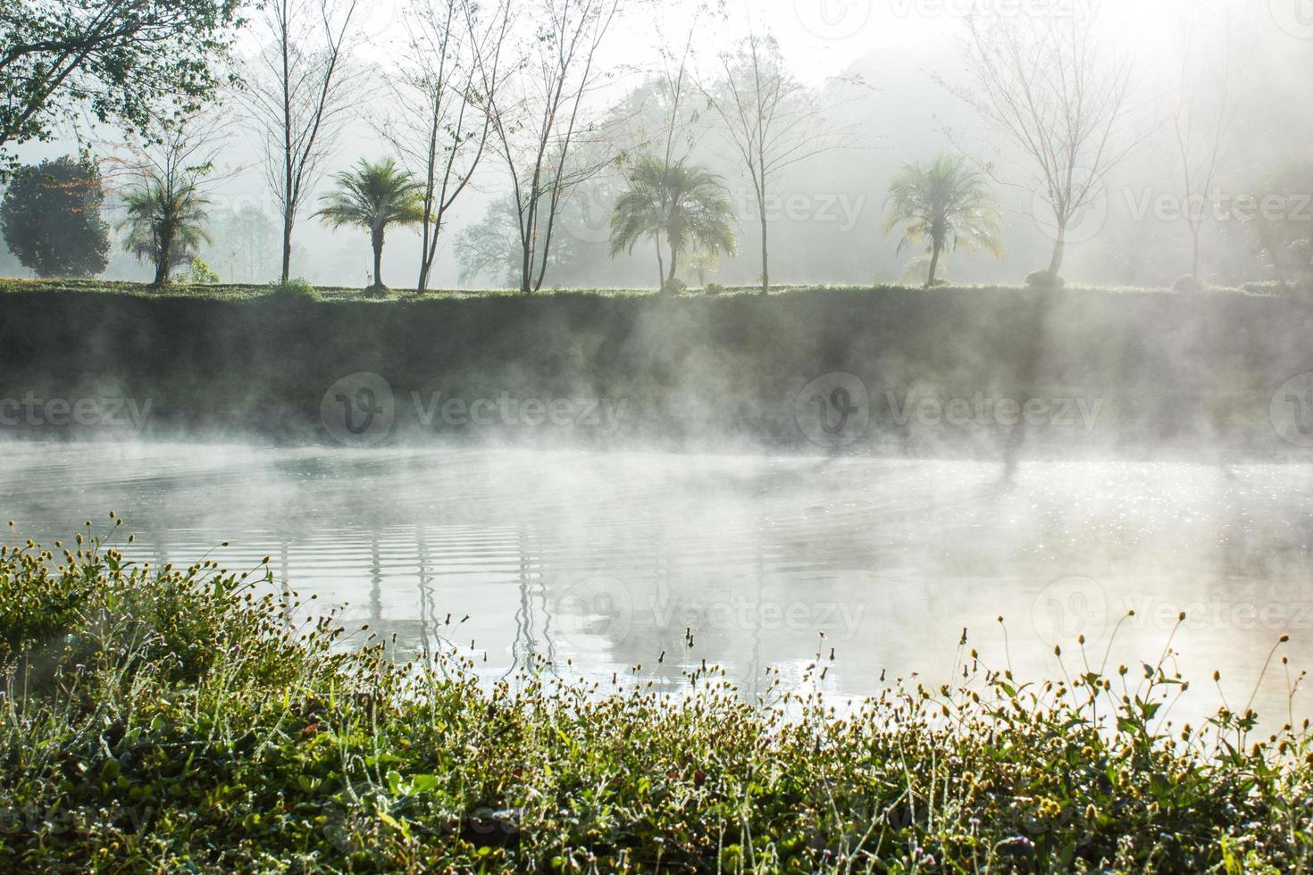 vijver met mist foto