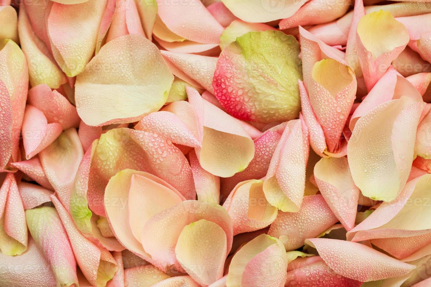 roze rozenblaadjes achtergrond foto