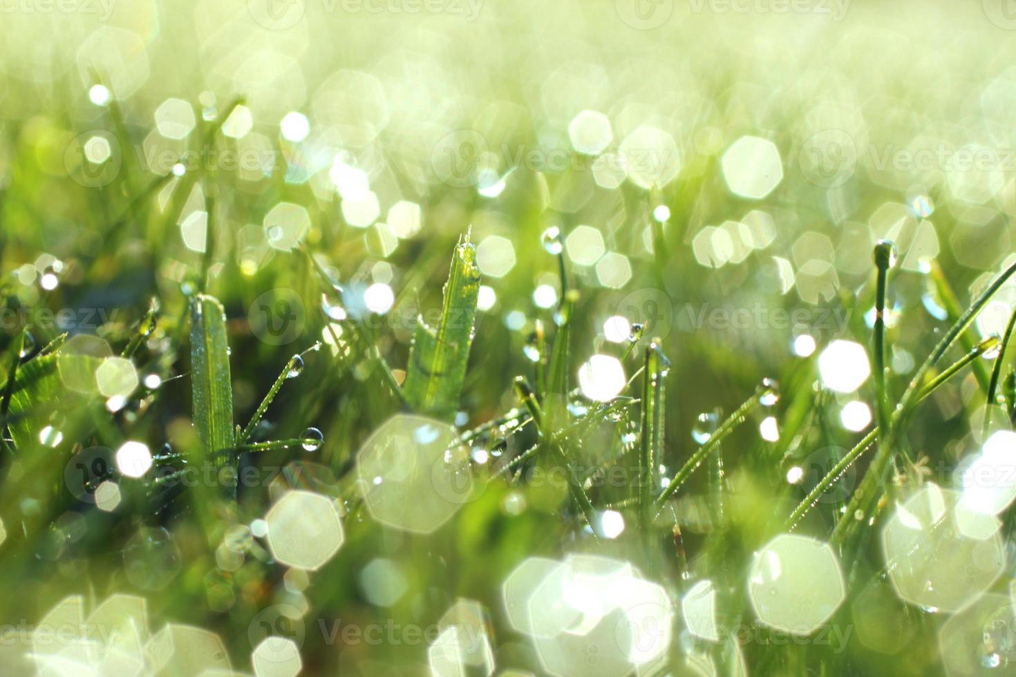 glinsterende ochtenddauw op gras foto