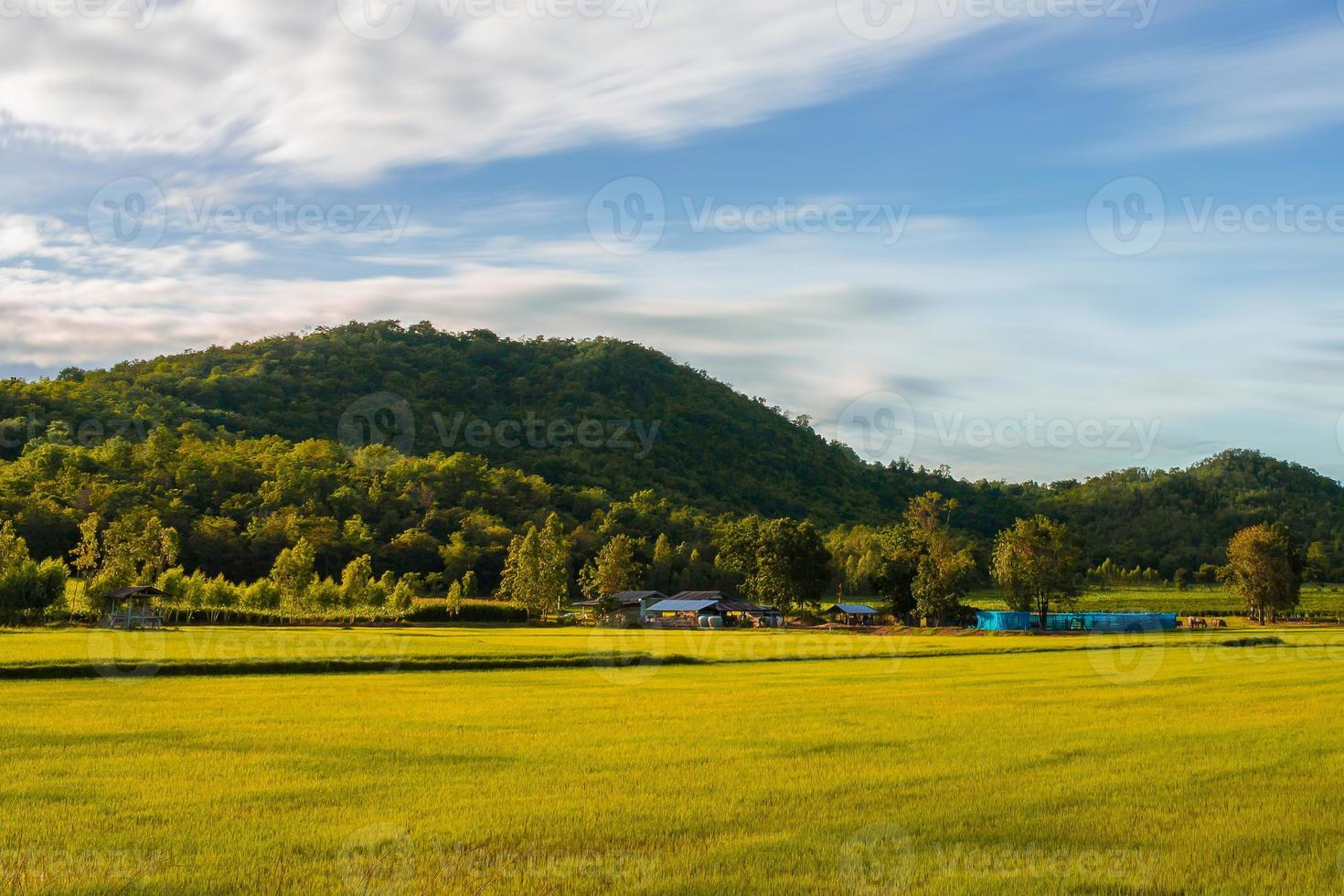 platteland van uthai thani, thailand foto