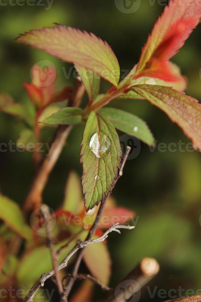 regendruppel zittend op een blad-macro foto