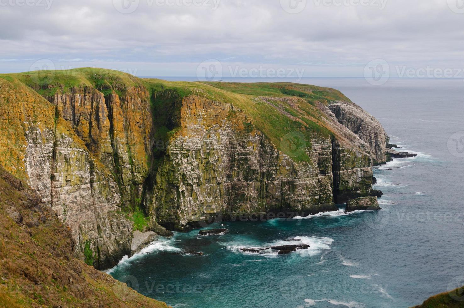 vogelkliffen in Newfoundland foto
