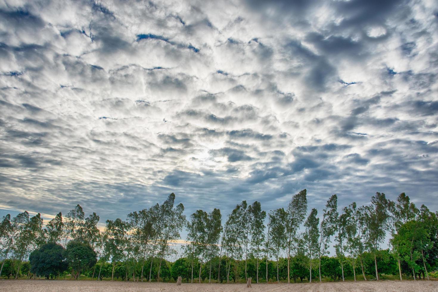 bomen onder dramatische hemel foto