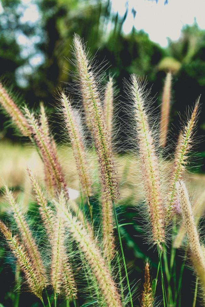 wilde bloemen in een weiland foto