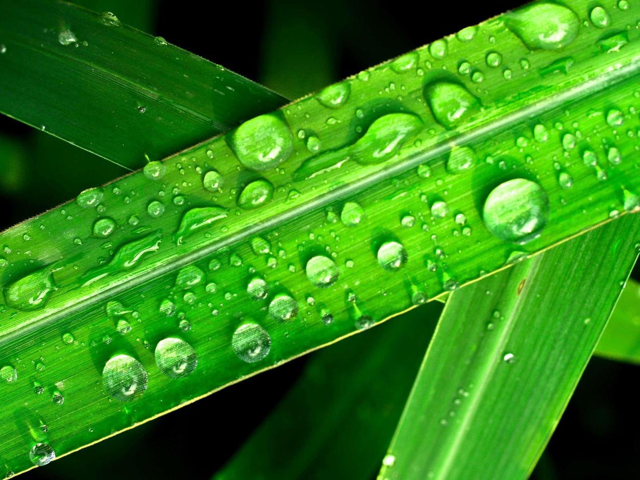 waterdruppels op blad foto