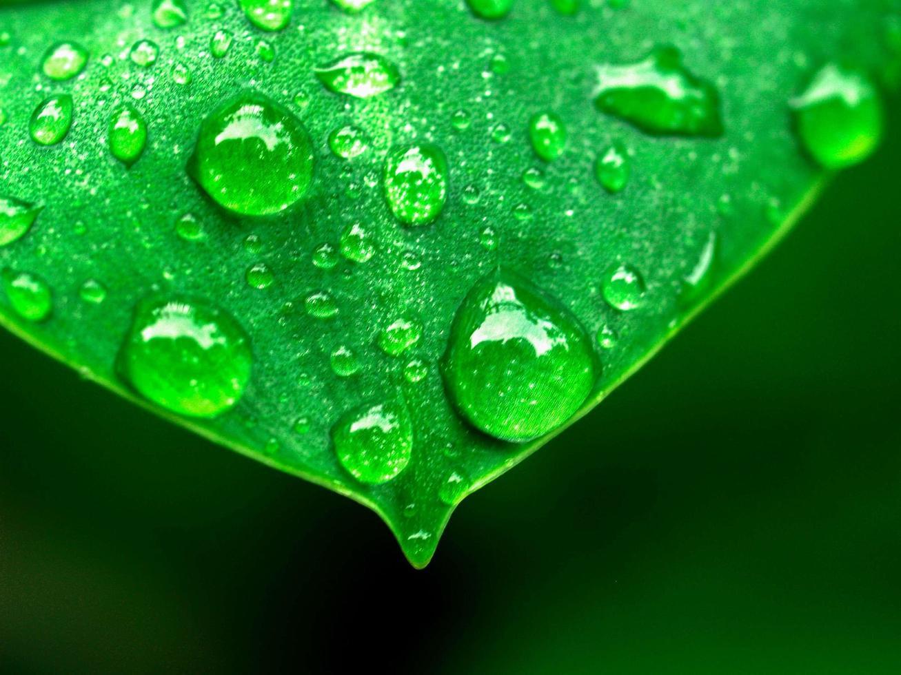 waterdruppels op een blad foto