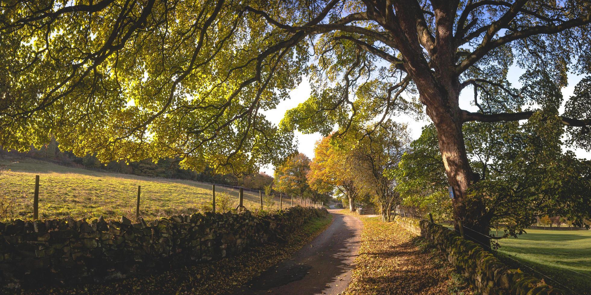 onverharde weg op het platteland foto