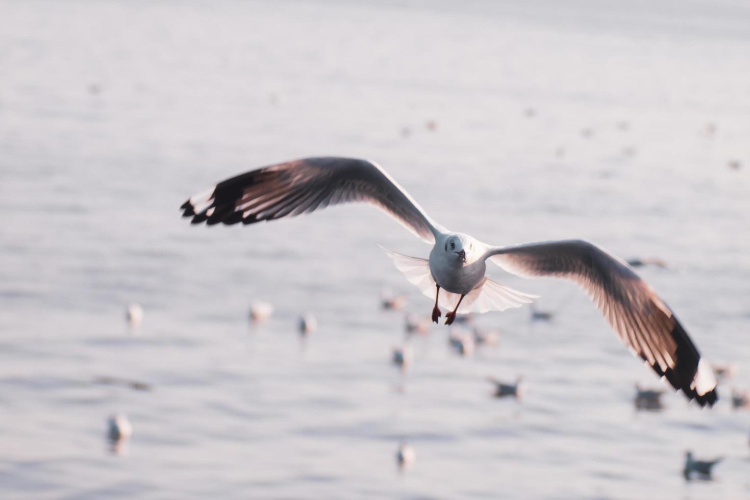 zeemeeuw tijdens de vlucht foto