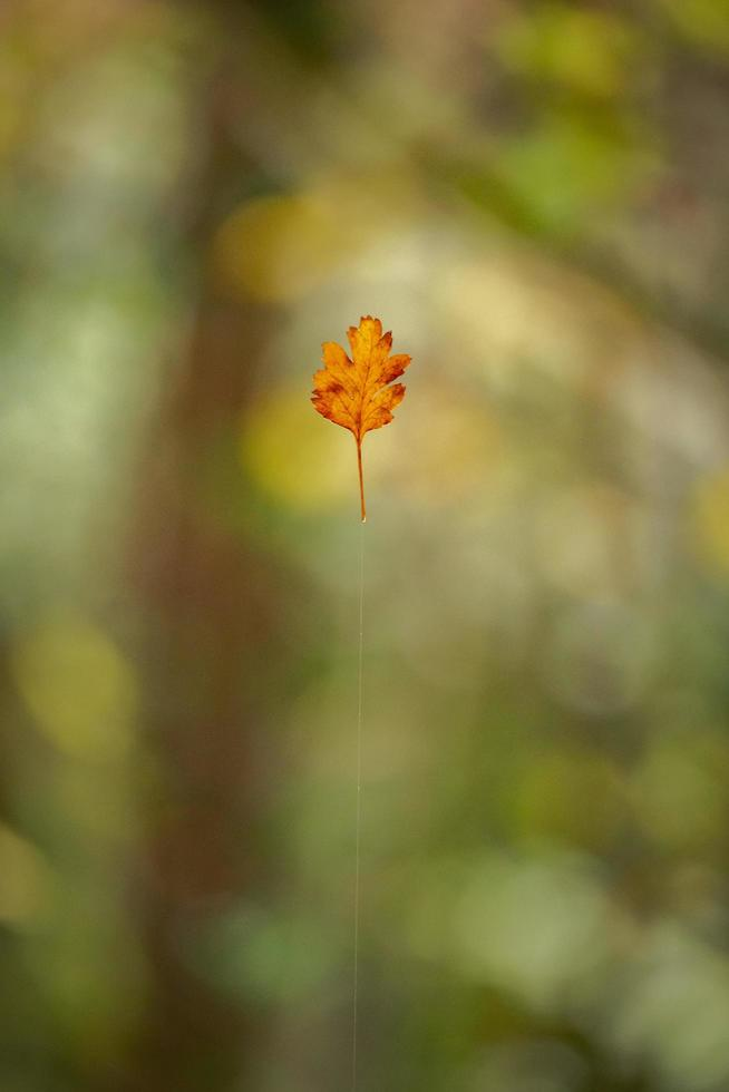 drijvend blad op groene achtergrond foto