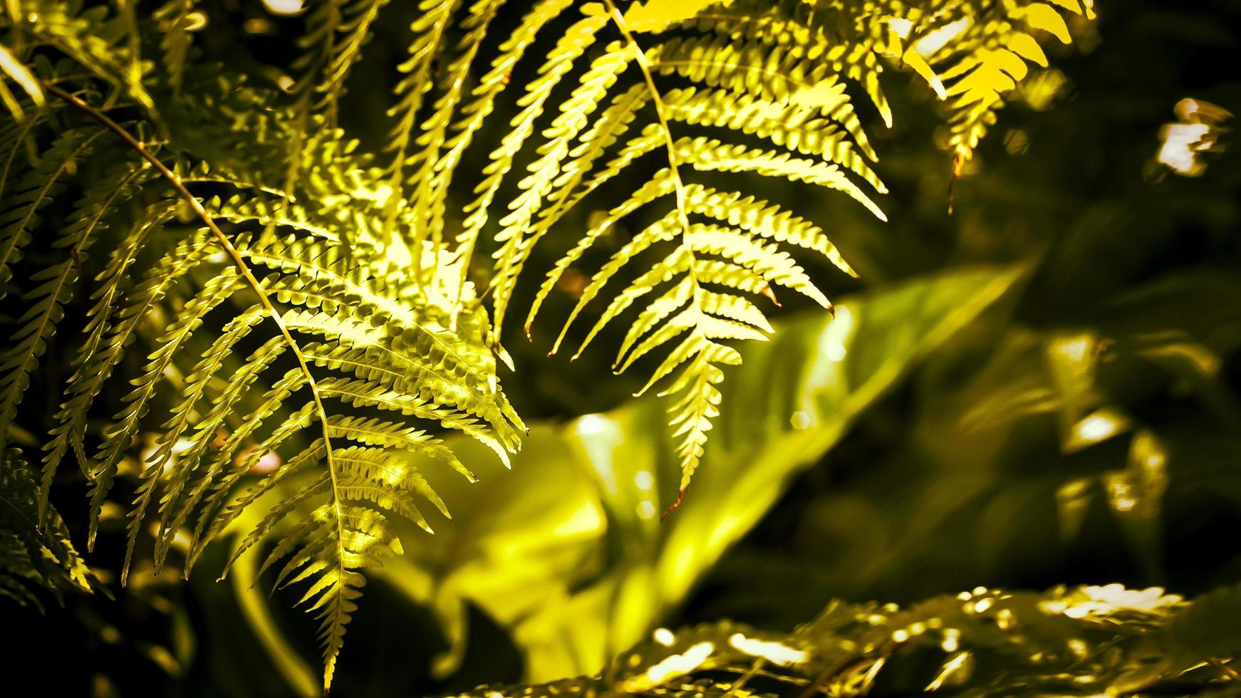 ochtendzon in een mistig regenwoud foto