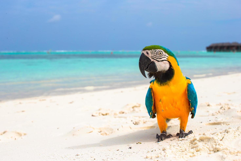 papegaai op een wit strand foto