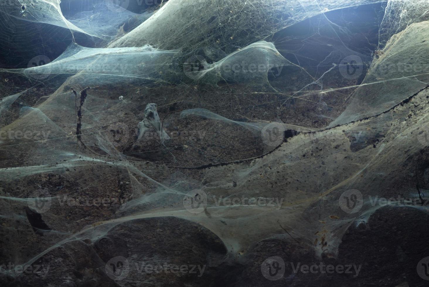 spinnenwebben univers foto
