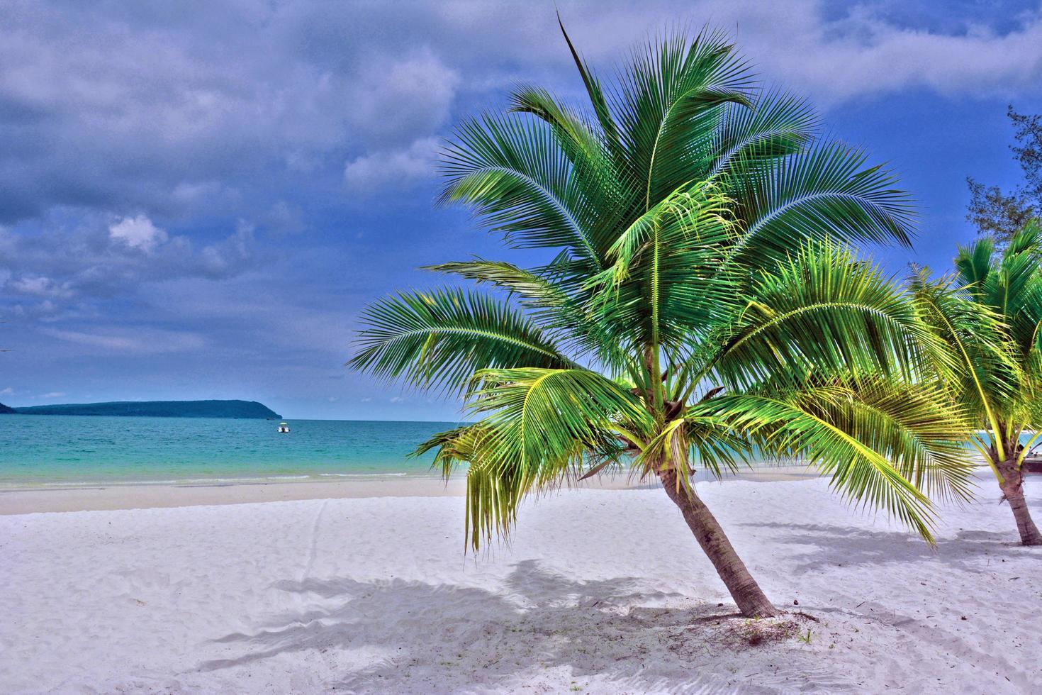 groene palmboom op wit zandstrand foto