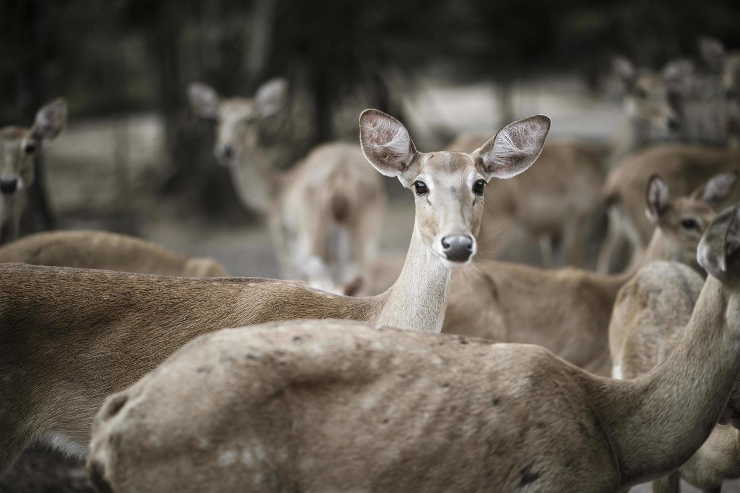 close-up van de kudde herten foto