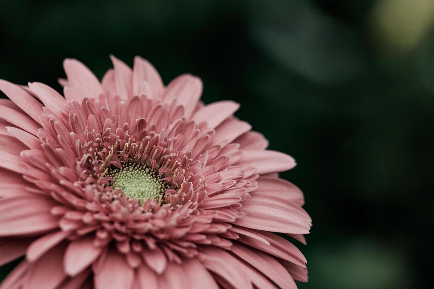 close-up van een roze bloem foto