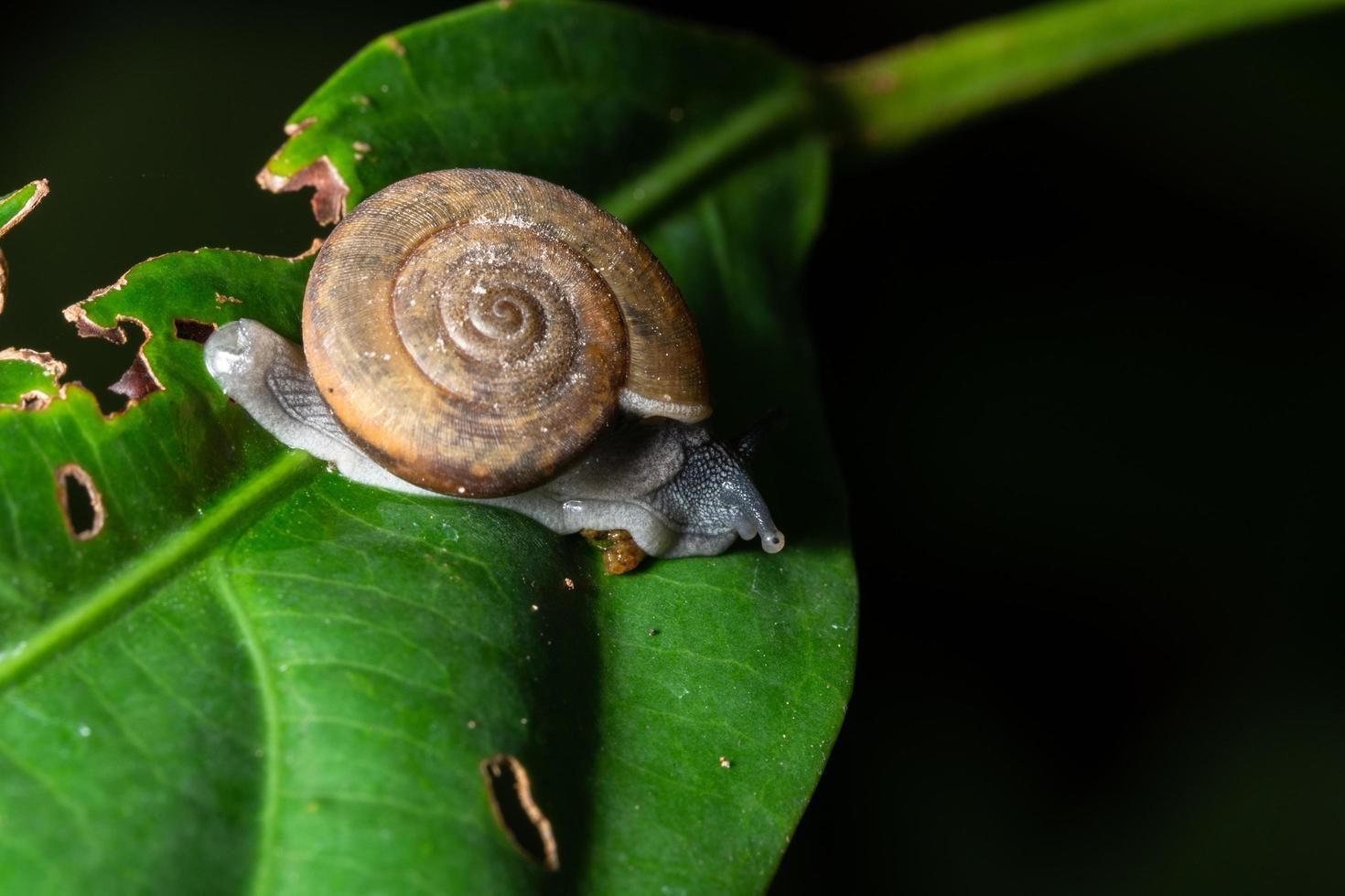 slak op een groen blad foto