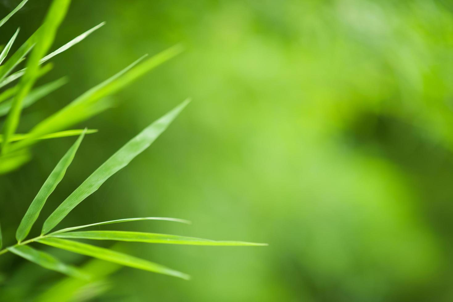 groene bamboe achtergrond foto