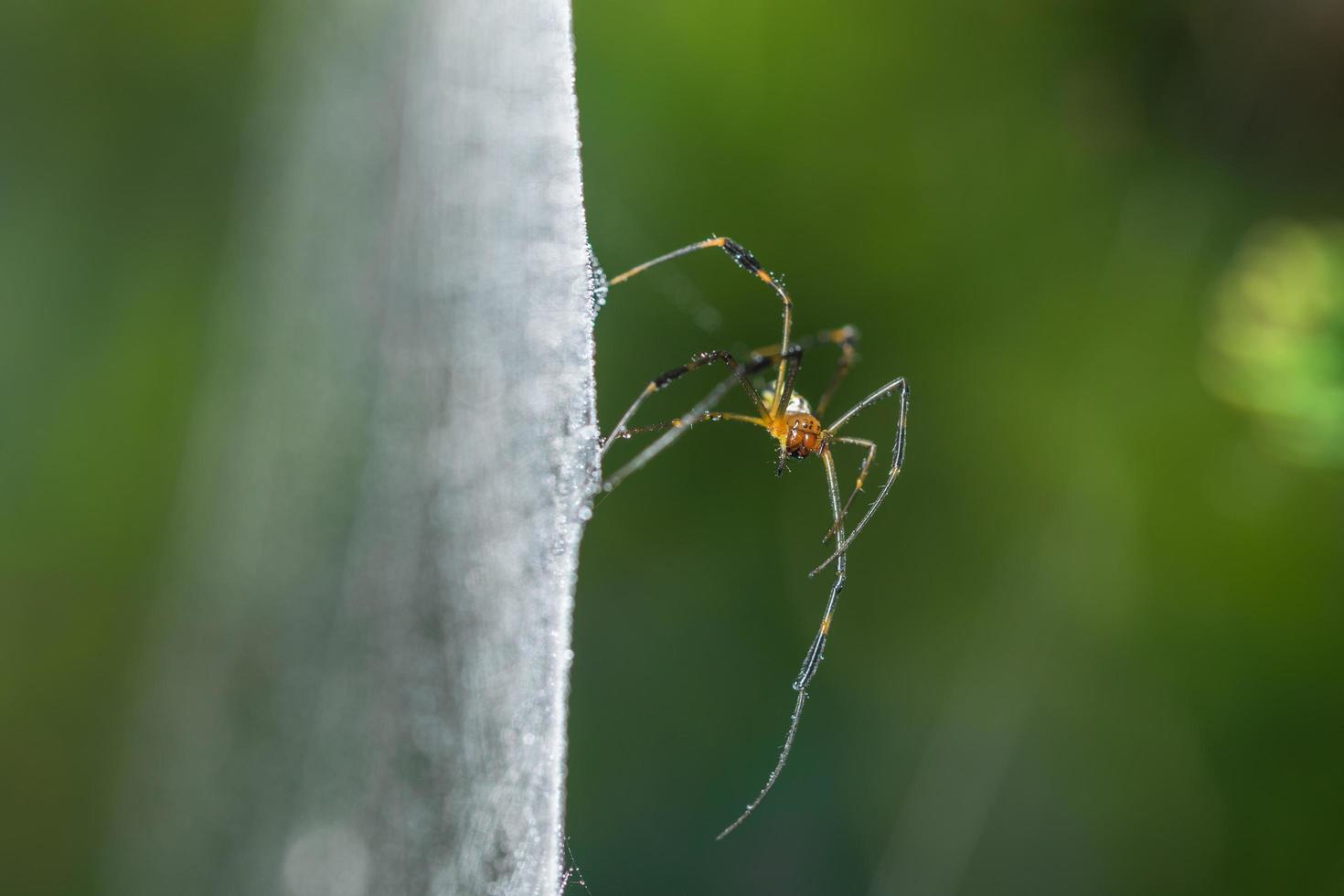 spin in het spinnenweb foto