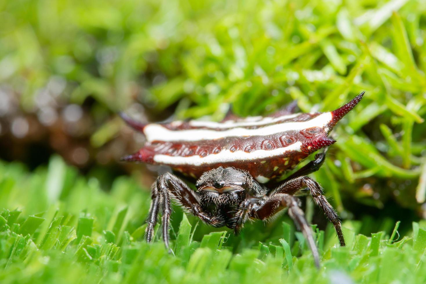 spin op het gras foto