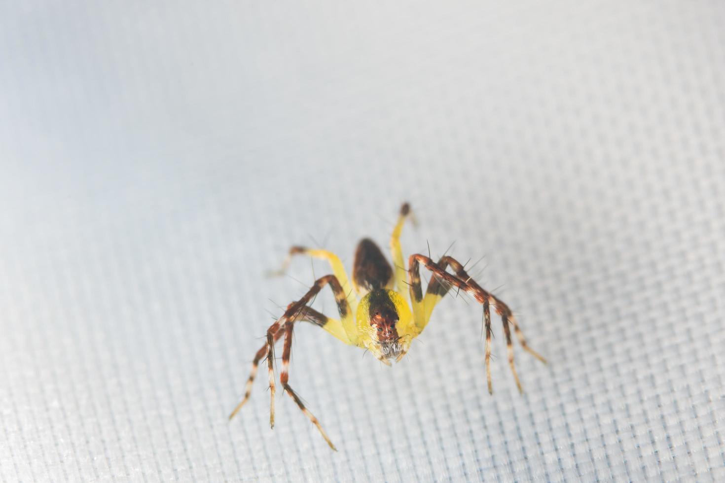 spin, close-upfoto foto