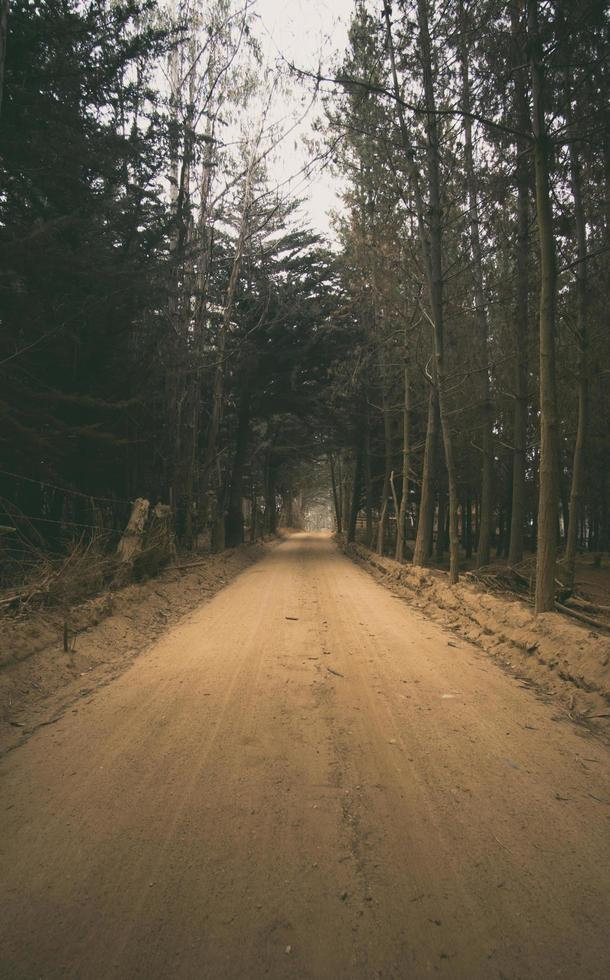 onverharde weg tussen bomen foto