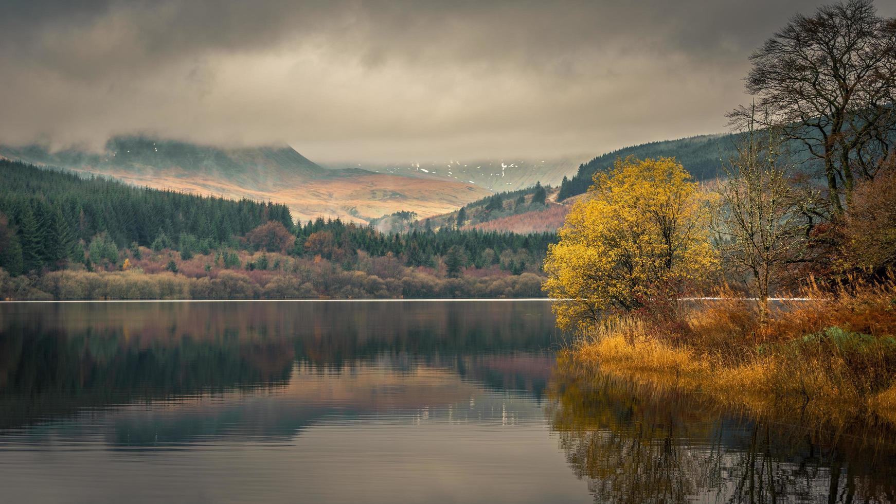 weerspiegeling van bomen op waterlichaam foto