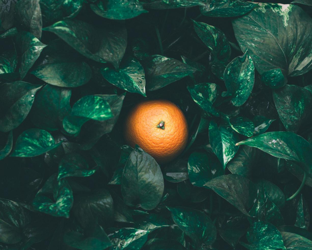 bovenaanzicht van een sinaasappel in bladeren foto