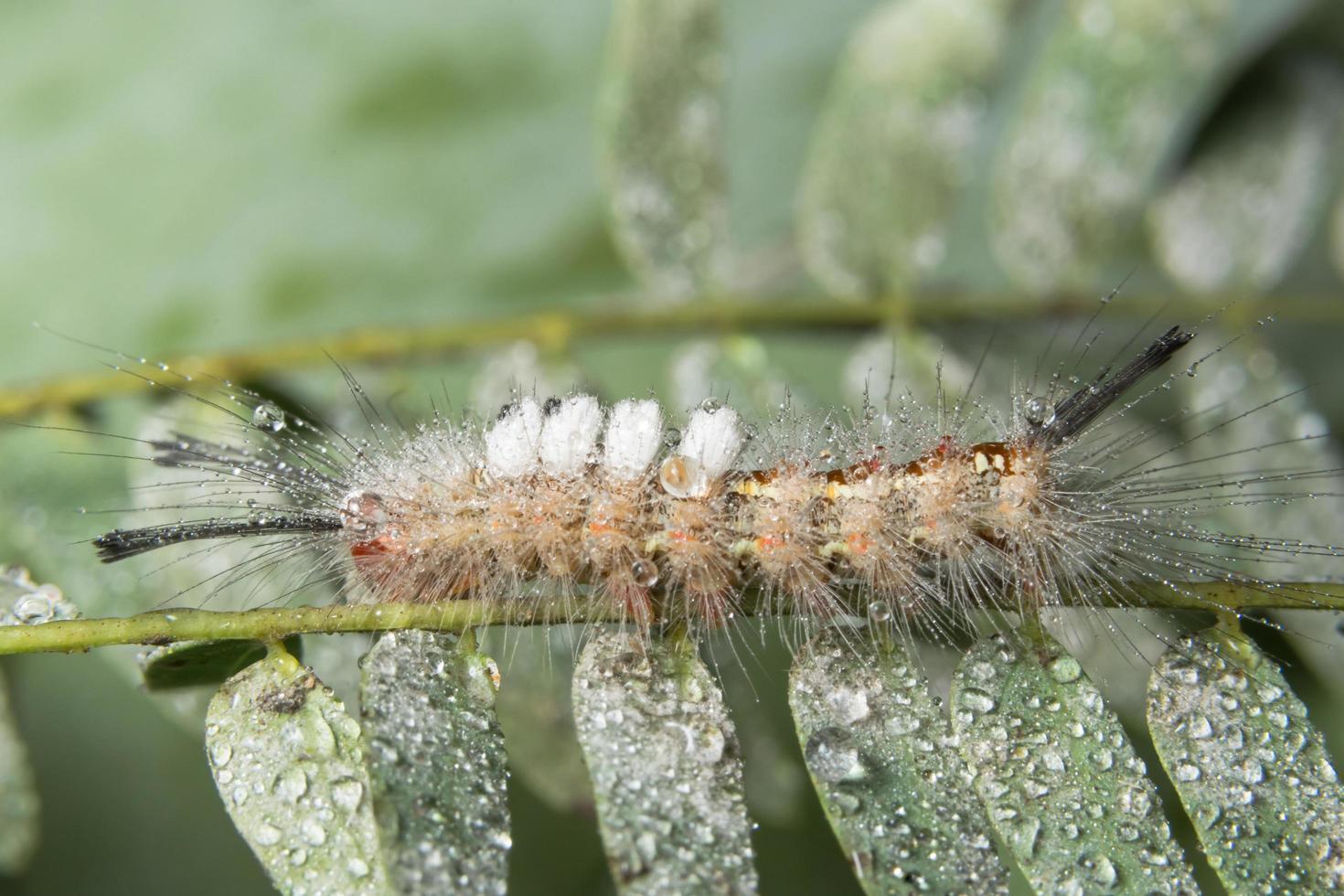 worm op een plant foto