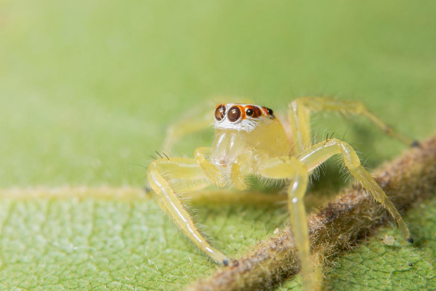 gele spin op groen blad foto
