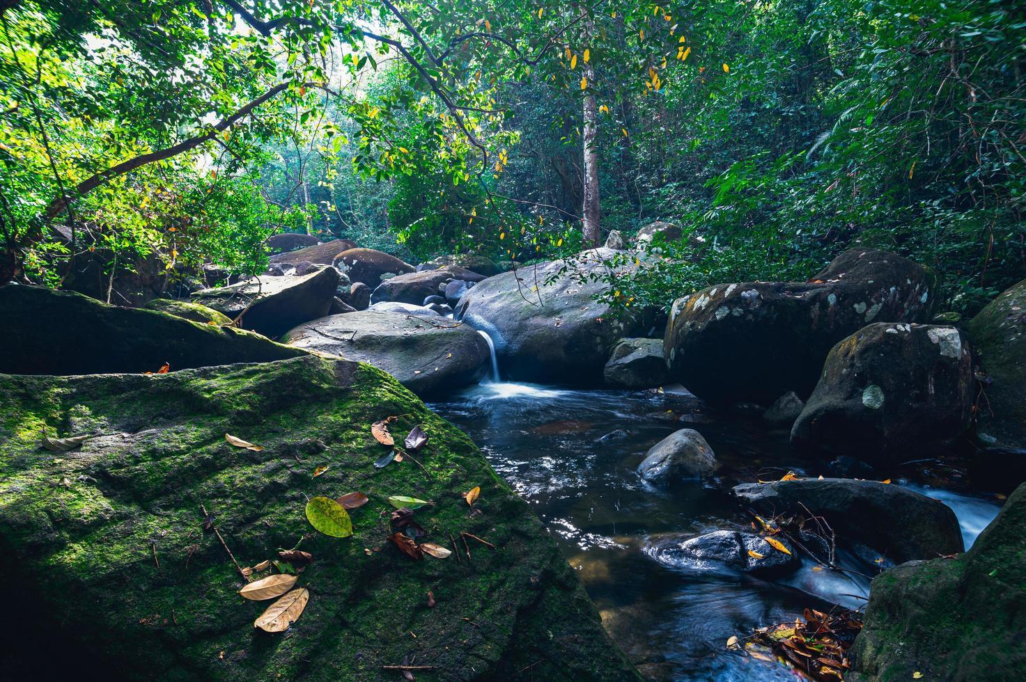 bos in het Khao Chamao Waterfall National Park foto