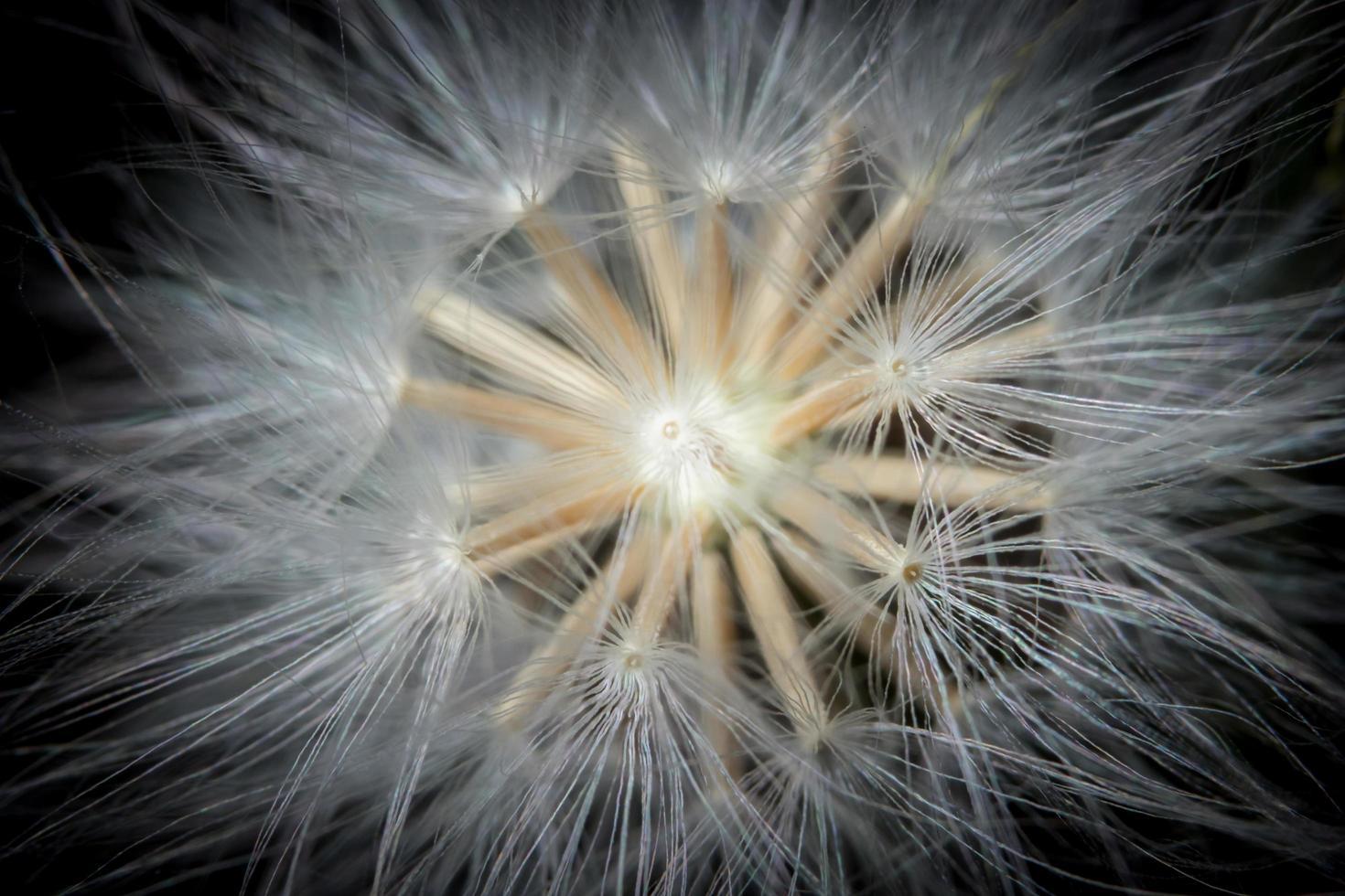 Wildflower, close-upfoto foto