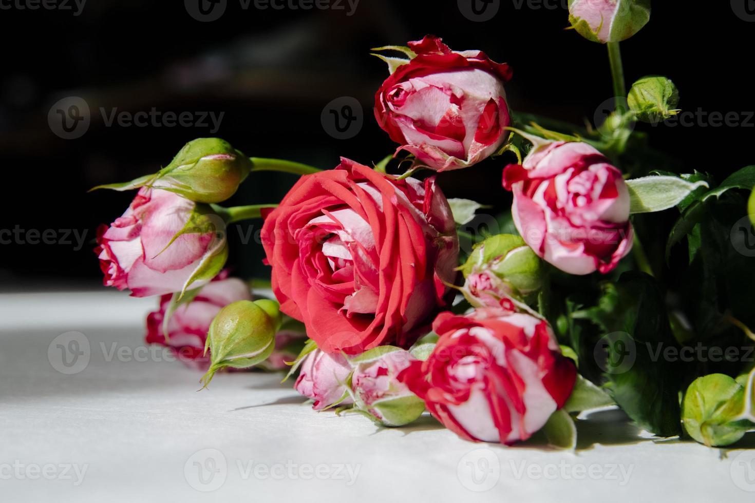 rode en witte rozen foto