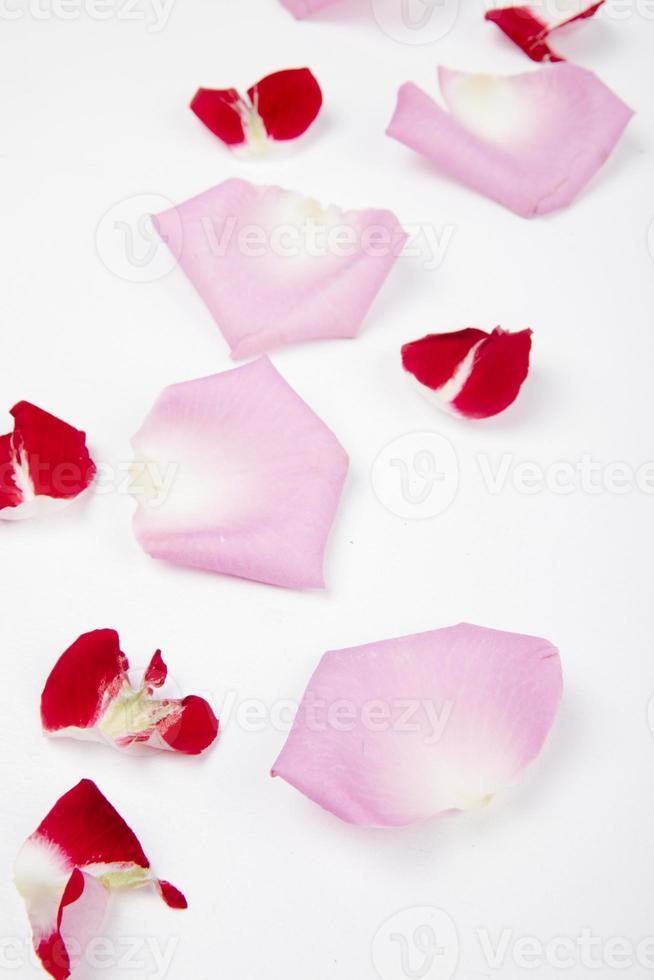 roze en rode bloemblaadjes op een witte achtergrond foto