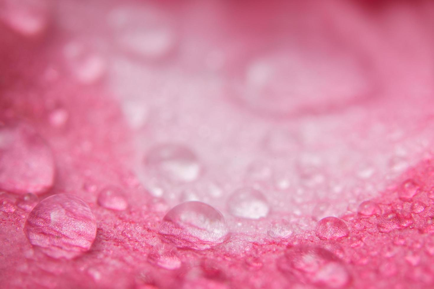 waterdruppels op bloemblaadjes foto