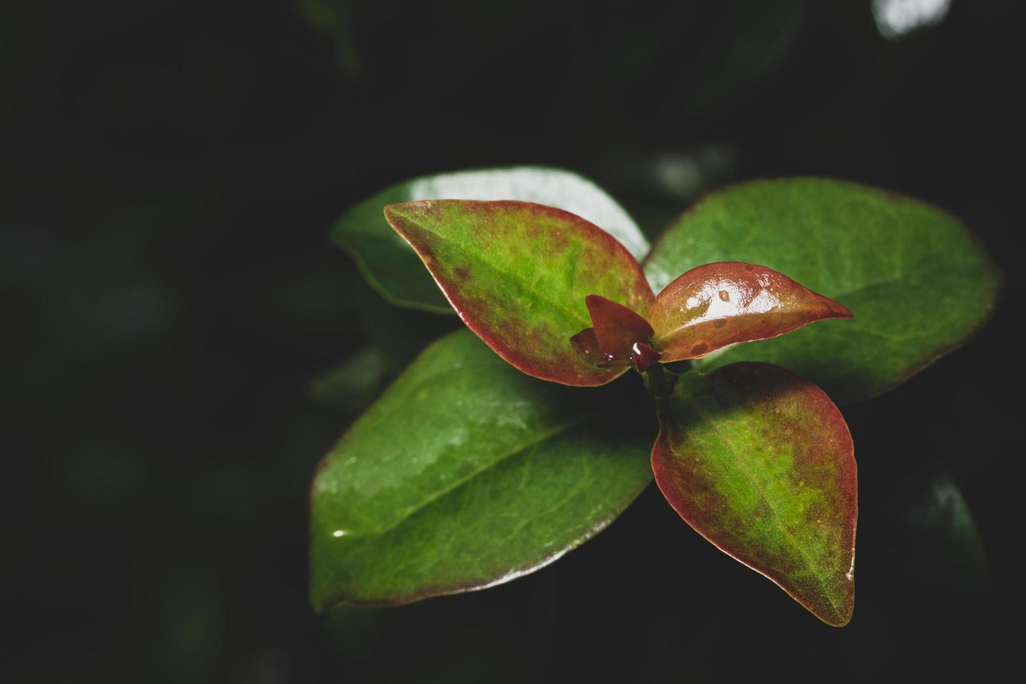 bladeren op zwarte achtergrond foto