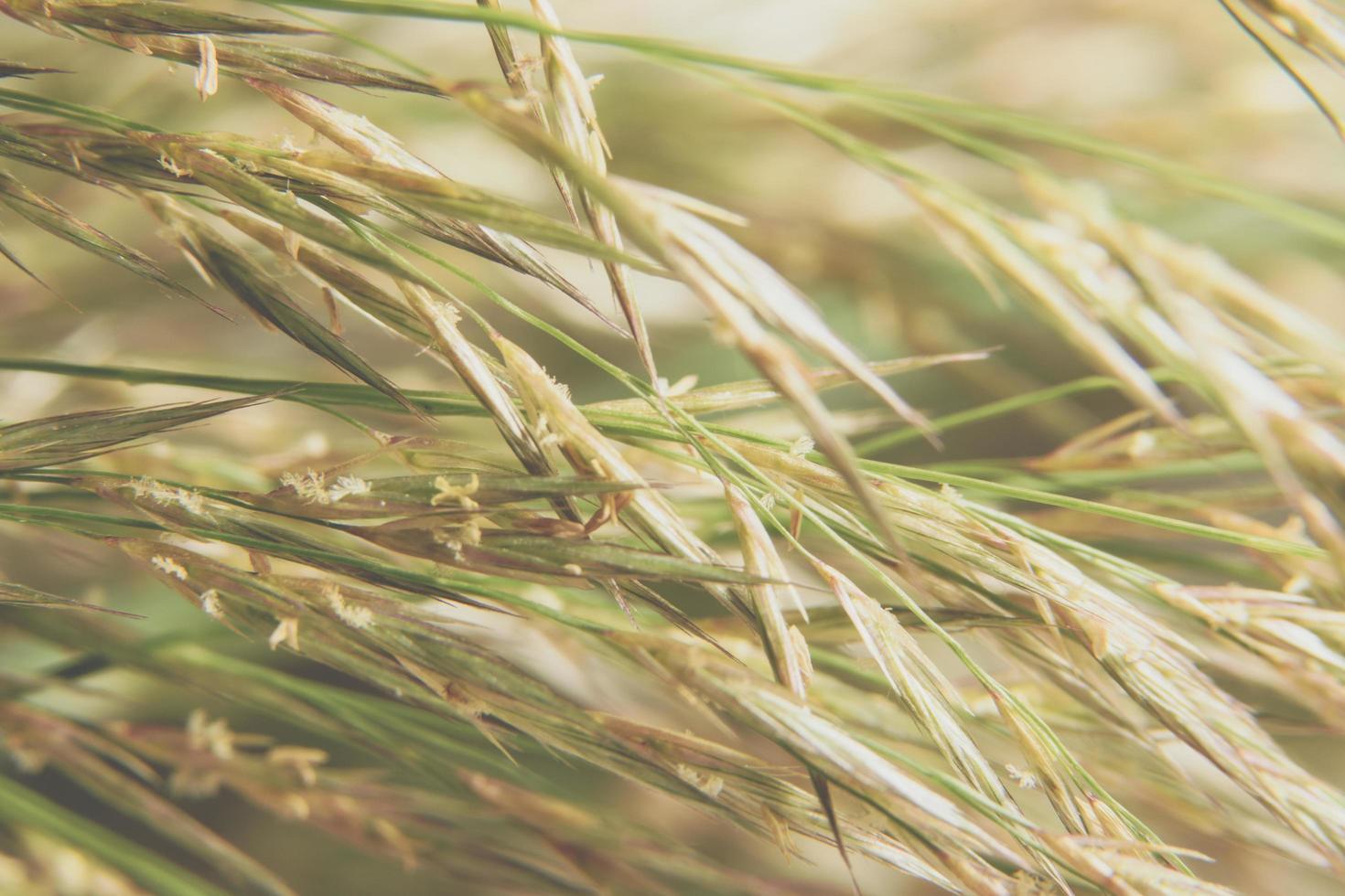 gras bloem macro foto