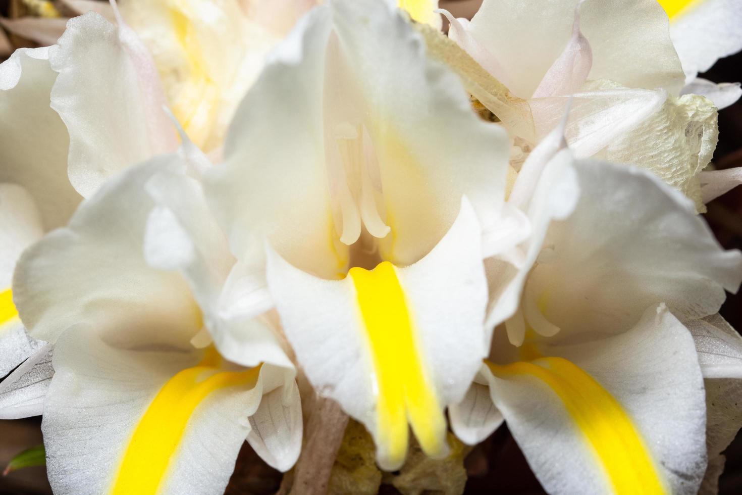 witte bloem close-up foto