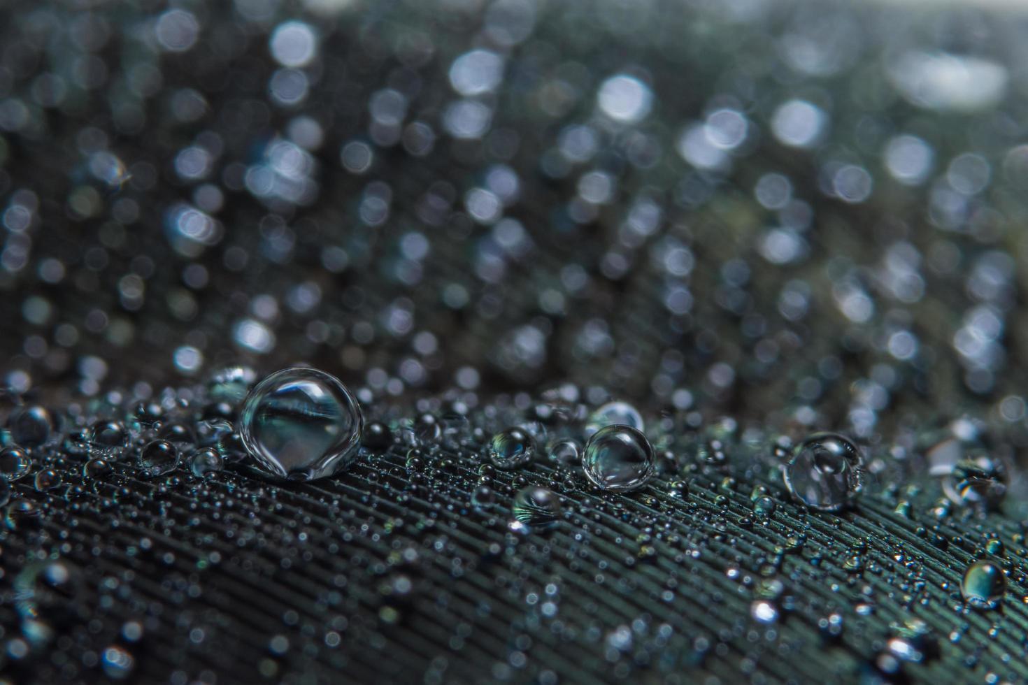 waterdruppels op een veer foto