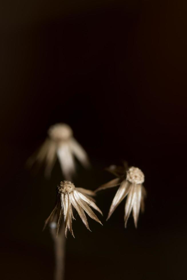 Wildflower op zwarte achtergrond foto