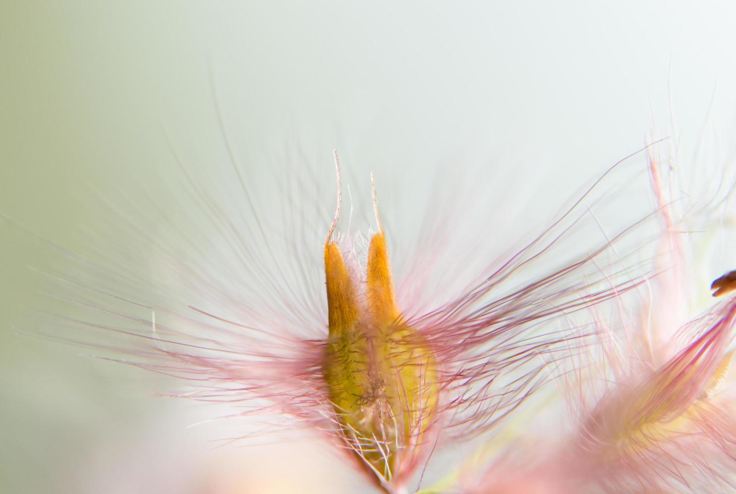 wilde bloemen, onscherpe achtergrond foto