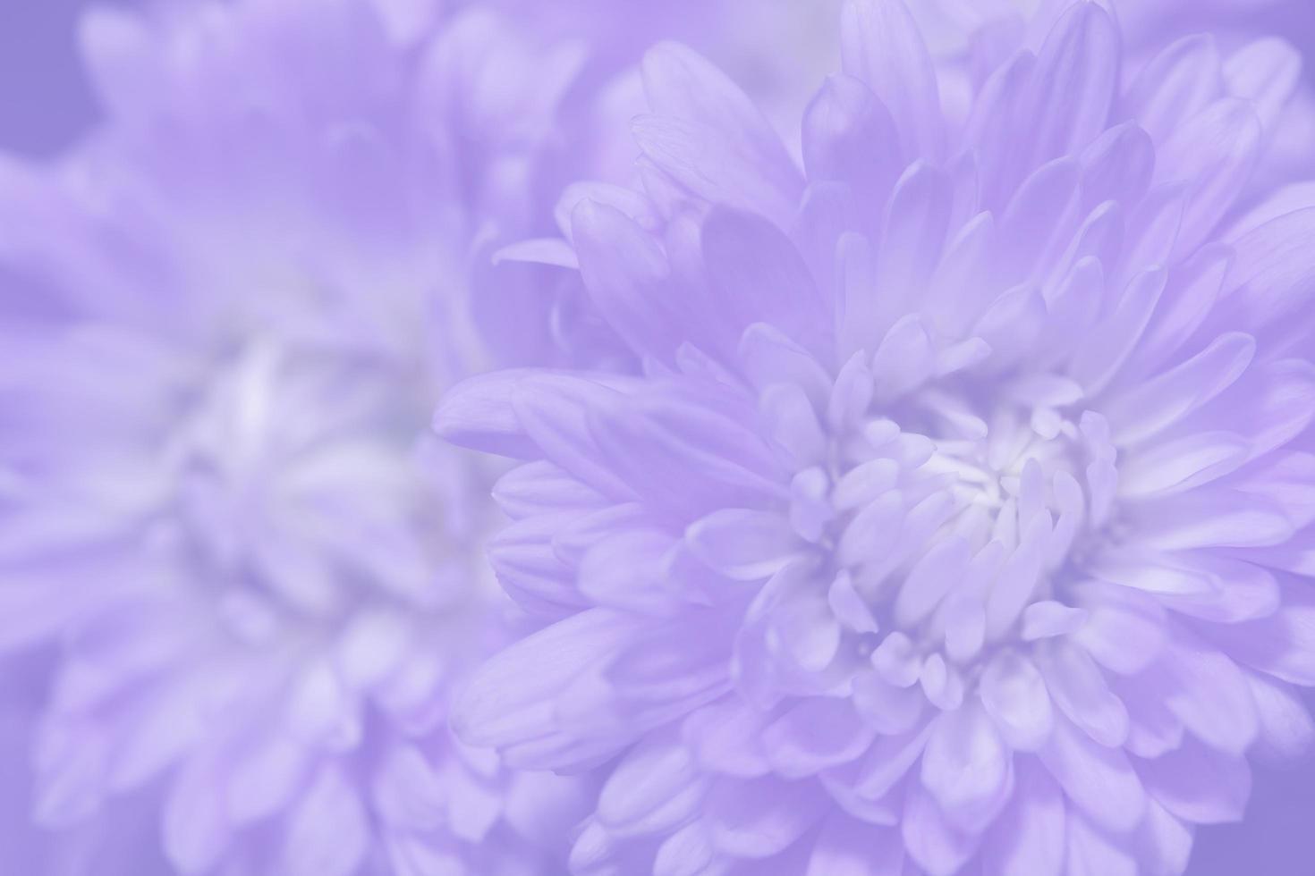 paarse bloem achtergrond foto