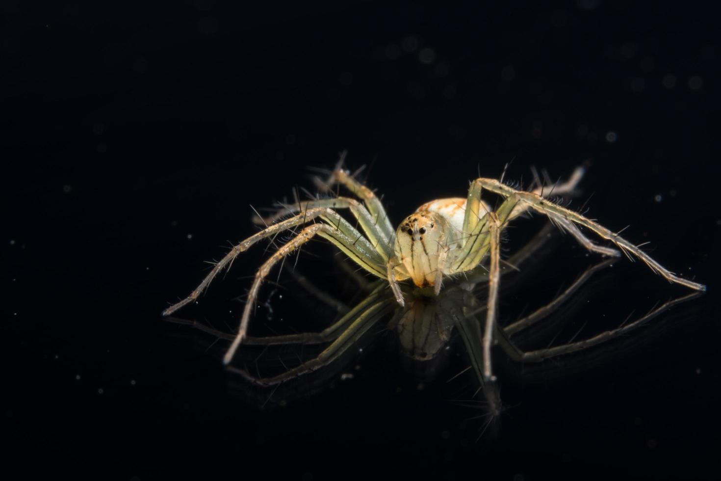 spin op zwarte spiegel foto