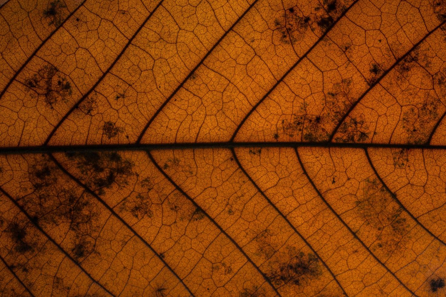 donkere droge bladachtergrond foto