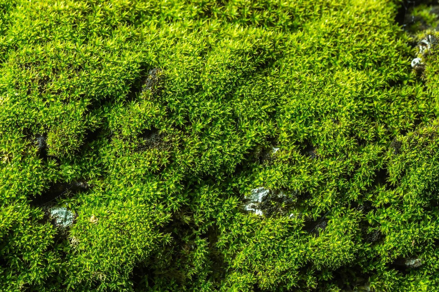 groene mos achtergrond foto