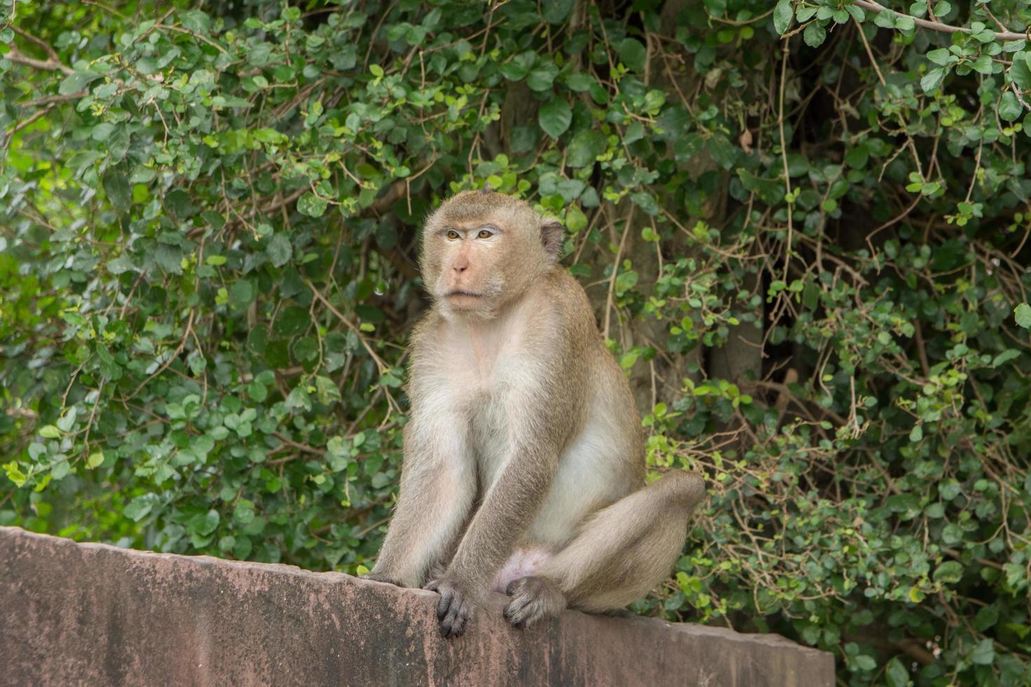 aap op een muur foto