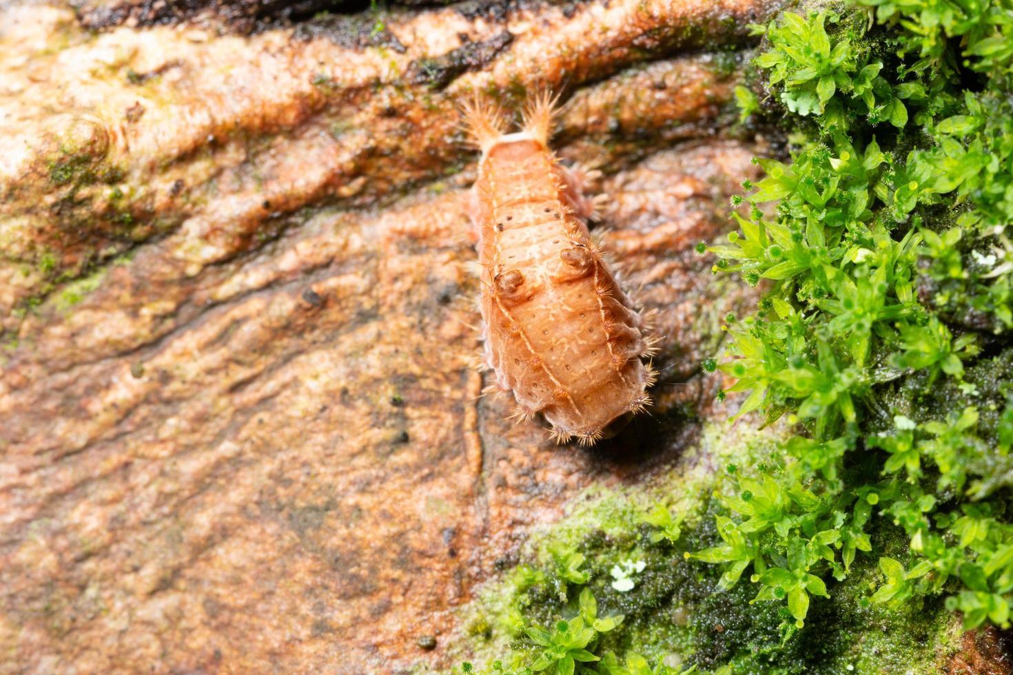 worm op een boom foto