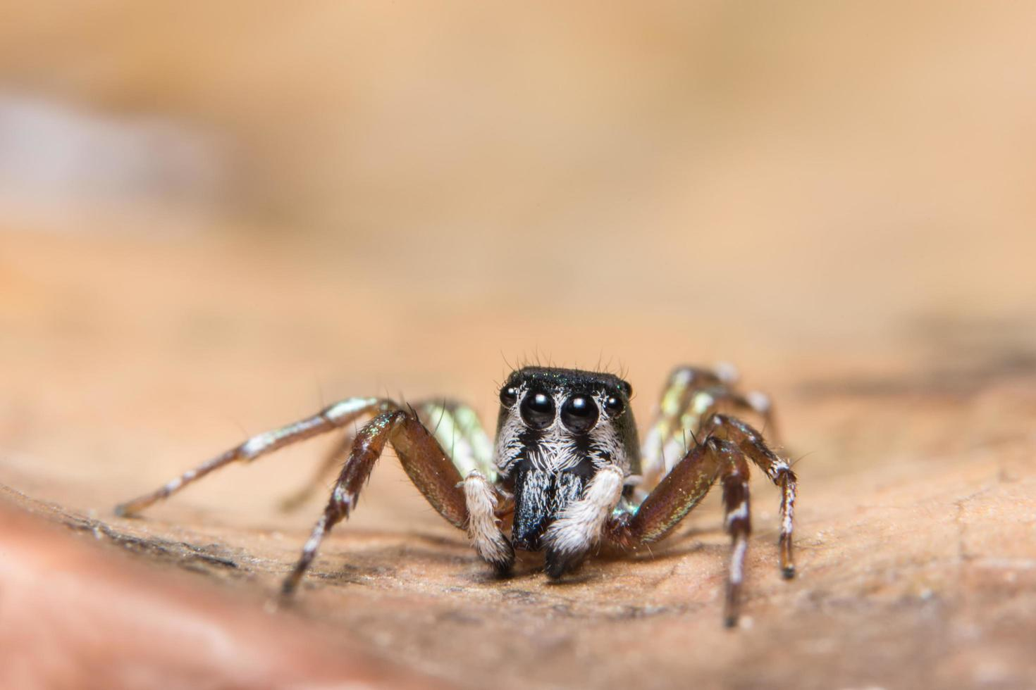 spin op een blad foto