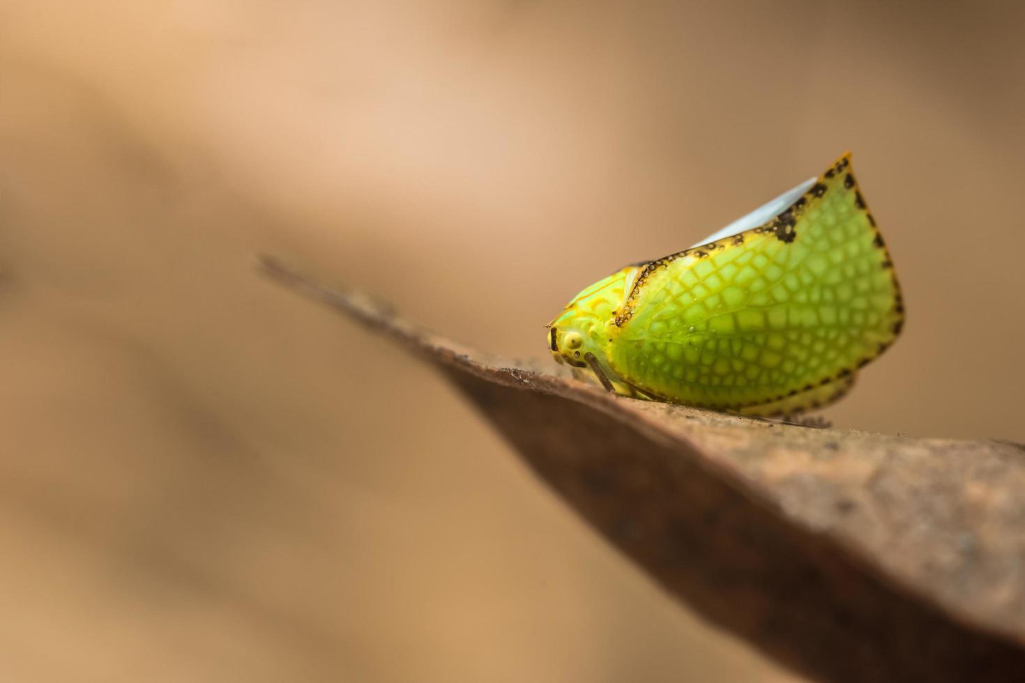 vlinder op een droog blad foto